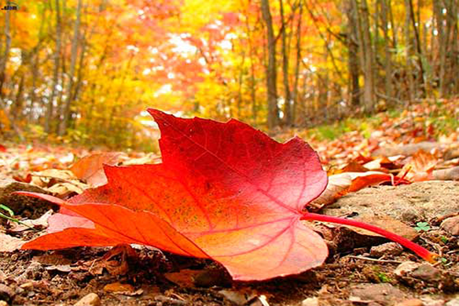 otoño en centro tres